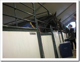 Inside the horse stable of the RCMP Musical Ride