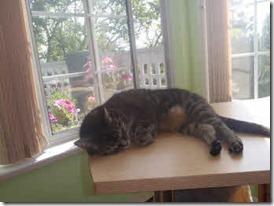 My cat Faith sound asleep on the desk