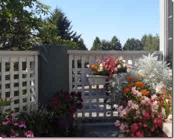 Glenda's deck garden in full bloom