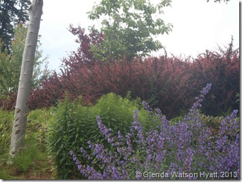 Various shrubs in a variety of colours