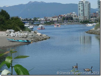 Canadian geese in the foreground, False Creek, cityscape and mountains in the background